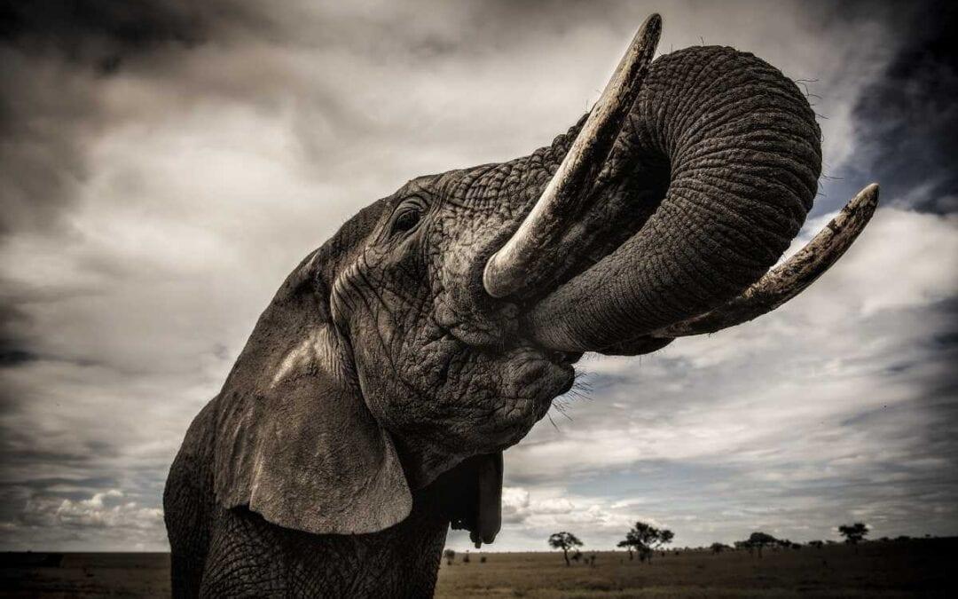 Kenya Elephant Walk