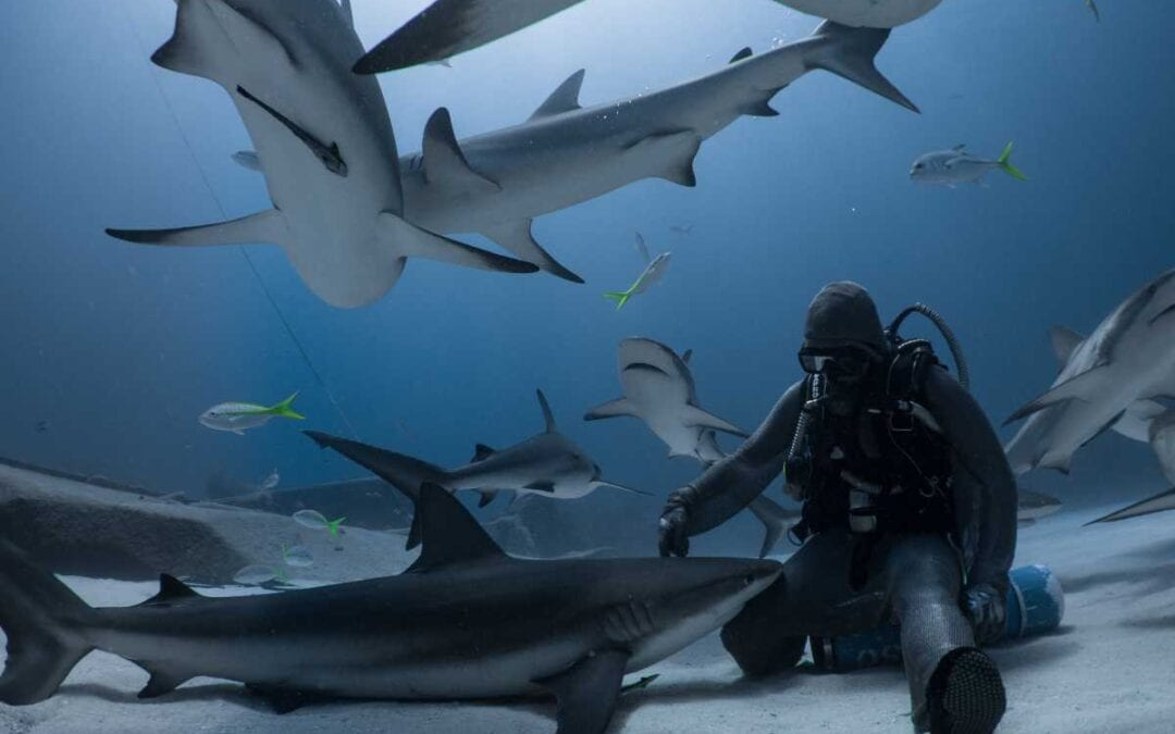 Hooked on Sharks